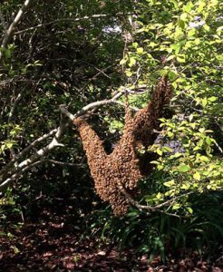 swarm on tree